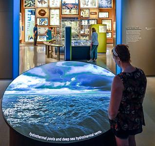 Photo Credit: Joe Szurszewski 2020, Bell Museum, University of Minnesota