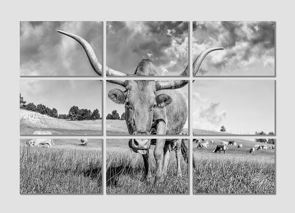 Fine Art Concepts - Nine Image Set, A Local Celebrity