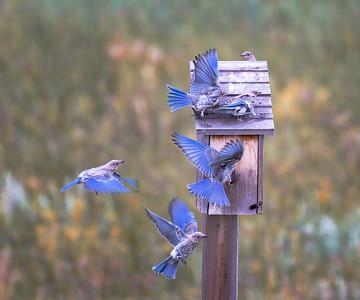 Crowded House - Falcon, Colorado