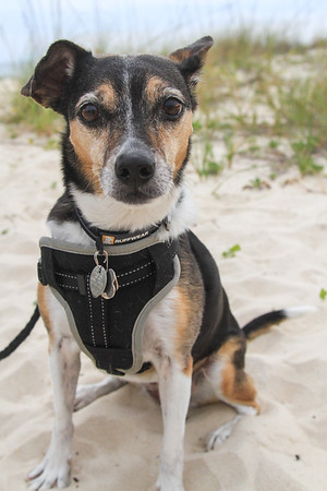 Bella & Linda Hughes SGI Beach Pet Photography Session