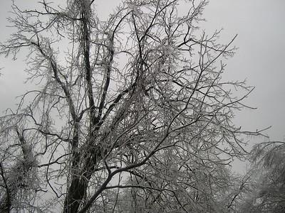 Ice Storm 2007 (38)