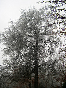 Ice Storm 2007 (2)