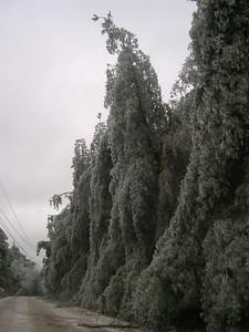 Ice Storm 2007 (39)