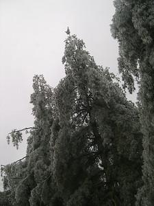 Ice Storm 2007 (42)