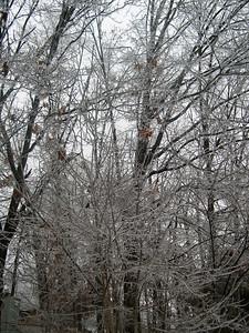 Ice Storm 2007 (7)