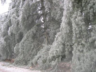 Ice Storm 2007 (41)