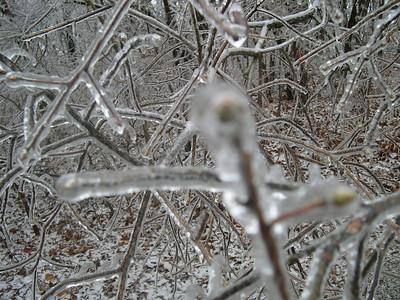 Ice Storm 2007 (29)