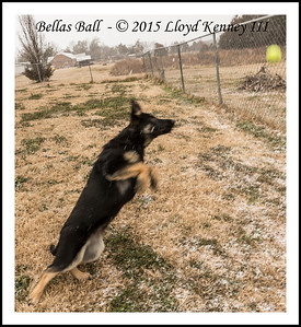 Bella Vom Flutgrabens Second Snow Event Feb 20, 2015 18 Weeks Old