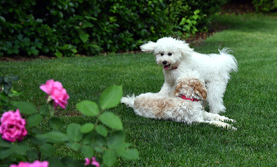 Bella and Havarti