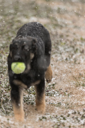 Bella's First Snow Feb. 18, 2015