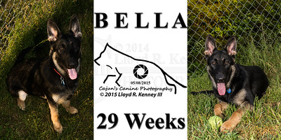 Bella @ 29 Weeks