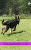 Ms. Bella Vom Flutgraben - 11 Months Old