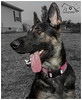 Ms. Bella Vom Flutgraben - 13 Months Old