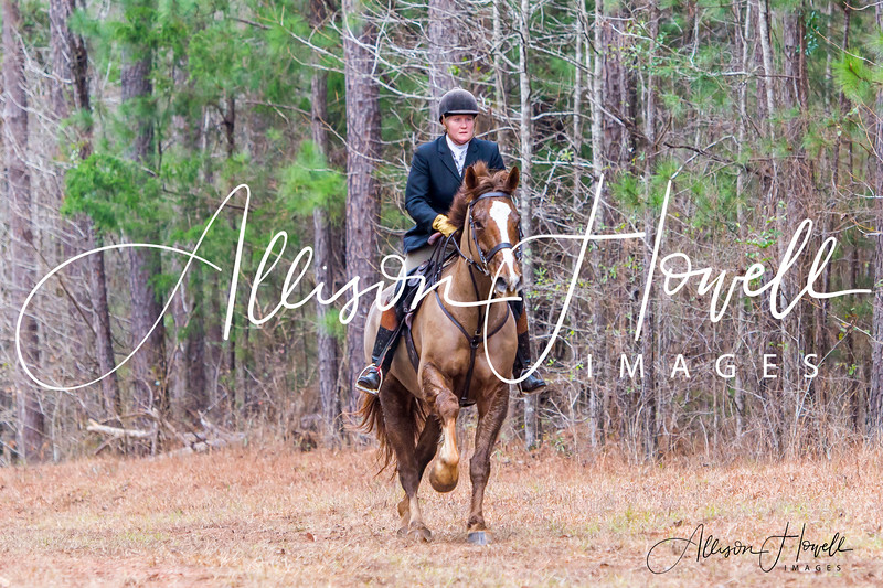 Chestnut trotting on pipeline wm2019