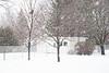 Snow falling in the backyard.