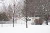 Snow falling in the backyard. 1/250 s