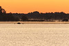 Four person rowing boat heads up the Bay of Quinte before sunrise.