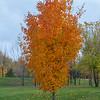 Orange tree at East Zwick's Park.