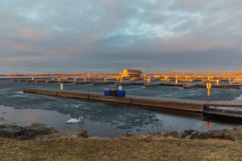 Meyers Pier soon after sunrise. Swan feeding along the edge of the ice.