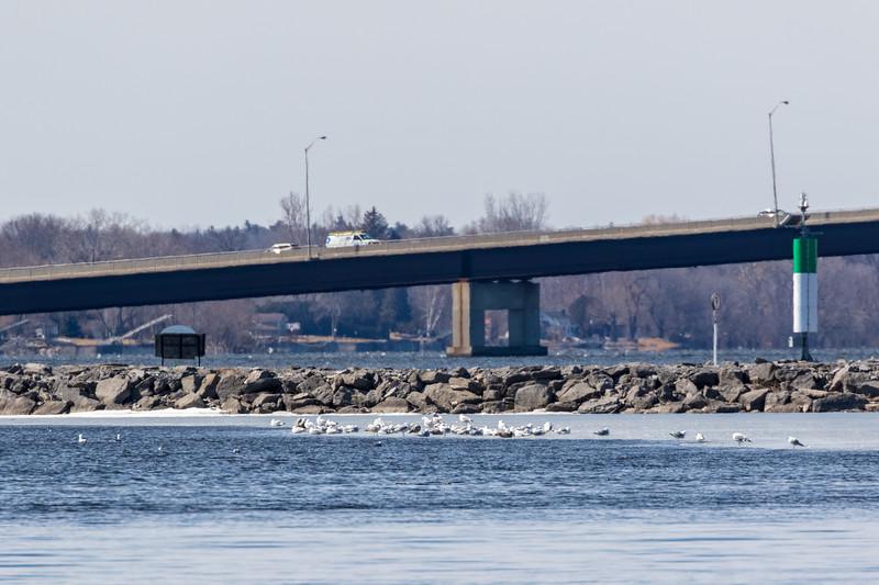 Norris Whitney Bridge 2019 April 4 not much ice left
