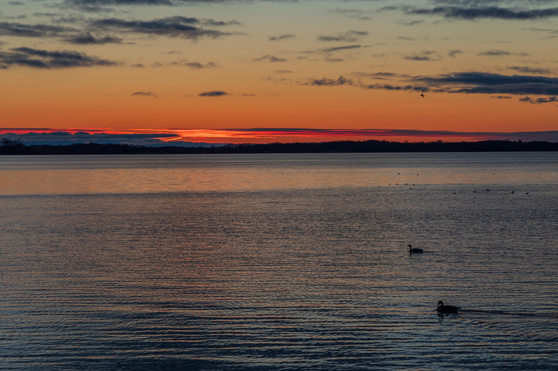 Waterfowl on the Bay of Quinte before sunrise at Belleville Ontario 2019 April 10.