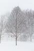 Backyard trees in snow 2019 February 13.