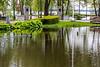 Ducks near Turtle Pond.