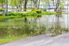 Duck near Turtle Pond.