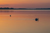 Swans just after sunrise on the Bay of Quinte.