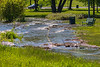 Submerged pathway at West Zwicks Park 2019 June 6.