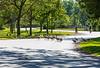 Geese crossing Keegan Parkway