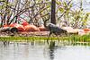 Heron walking at Turtle Pond