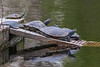 Turtles on raft