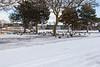 Geese in Riverside Park in Belleville 2019 January 27.