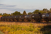 Tank cars in consist of Canadian National Railways freight near Mitchell Road in Belleville Ontario