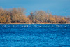 Seagulls on the Bay of Quinte