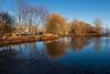 Turtle Pond 2020 December 2
