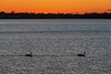 Two geese on the Bay of Quinte before sunrise