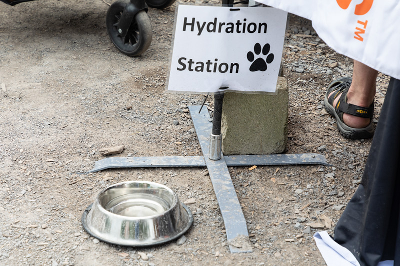 Canine hydration station