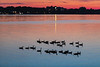 Geese on the Bay of Quinte before sunrise.