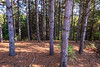 Sager Conservation Area -
