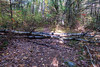 Sager Conservation Area - felled trees across path just before fence