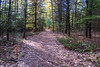 Sager Conservation Area - path