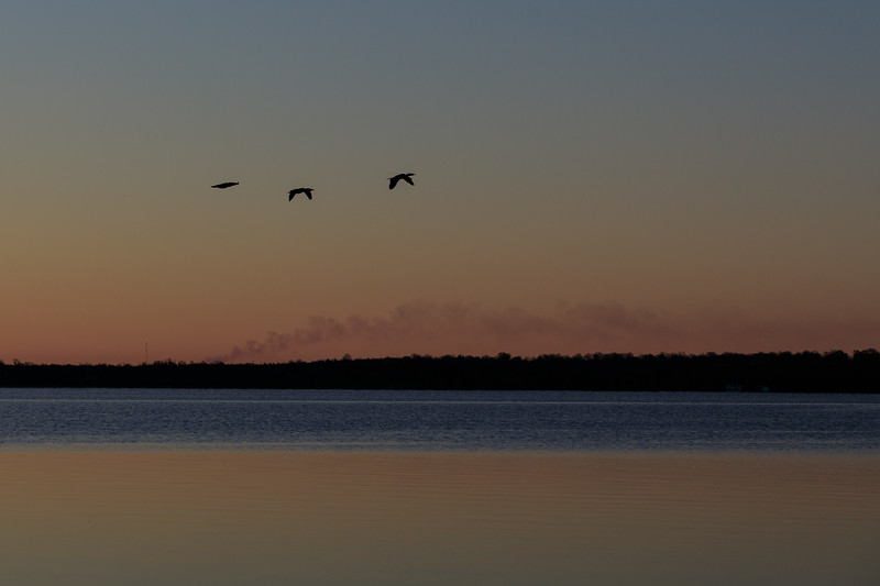 Geese at sunrise on the Bay of Quinte.