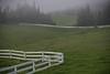 Kohala Ranch, on the way to Mary's house.