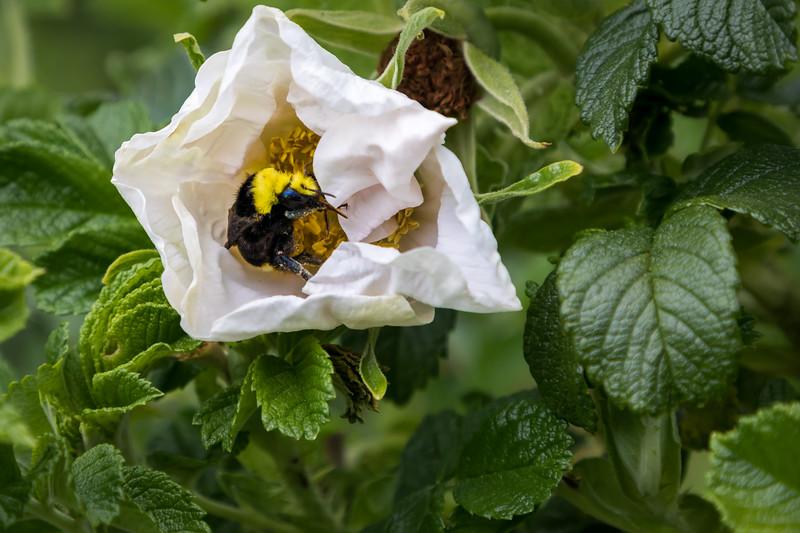 bee heaven :)
