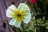 pollen abundo :)