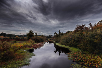 Autumn at Mercer Slough