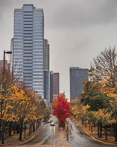NE 4th St in Autumn