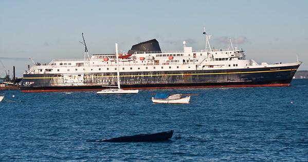 alaska-ferry-boats
